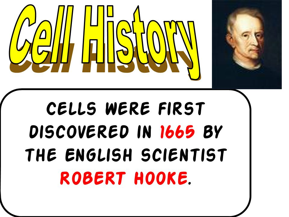 Cells were first discovered in 1665 by the English scientist