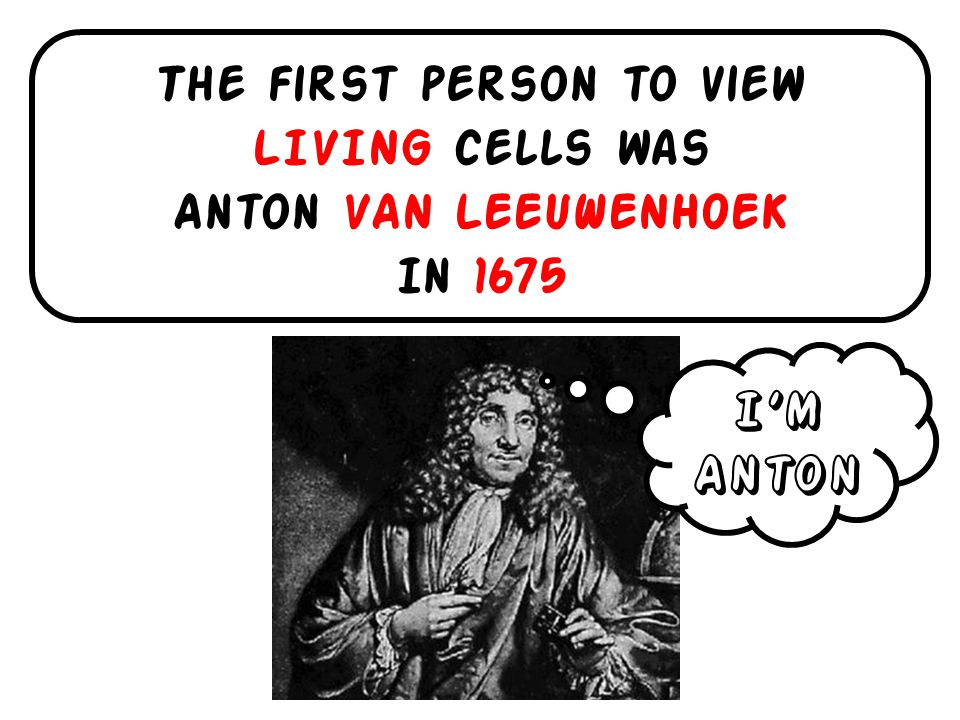 The first person to view LIVING cells was