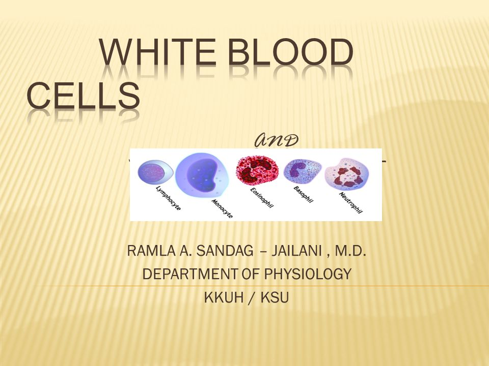 WHITE BLOOD CELLS and the differential count