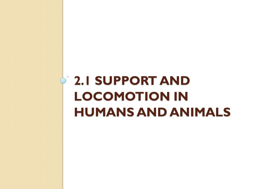 2.1 Support and Locomotion in Humans and Animals