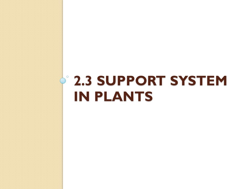 2.3 Support SYSTEM IN PLANTS