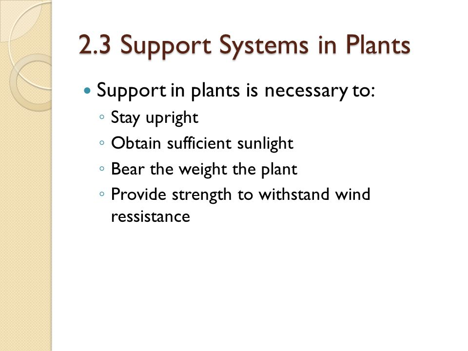 2.3 Support Systems in Plants