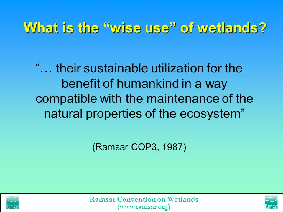 What is the wise use of wetlands