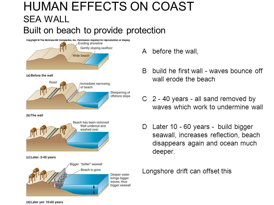 HUMAN EFFECTS ON COAST SEA WALL Built on beach to provide protection