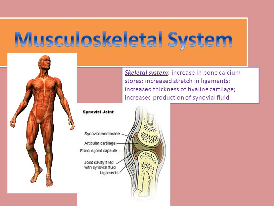 Skeletal system: increase in bone calcium stores; increased stretch in ligaments; increased thickness of hyaline cartilage; increased production of synovial fluid