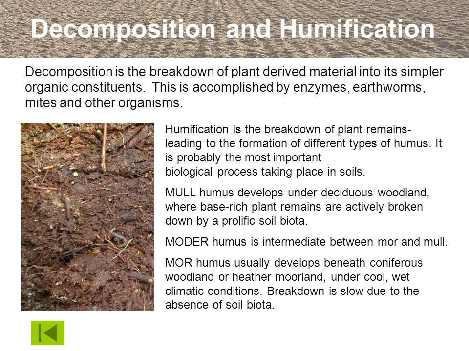 Decomposition and Humification