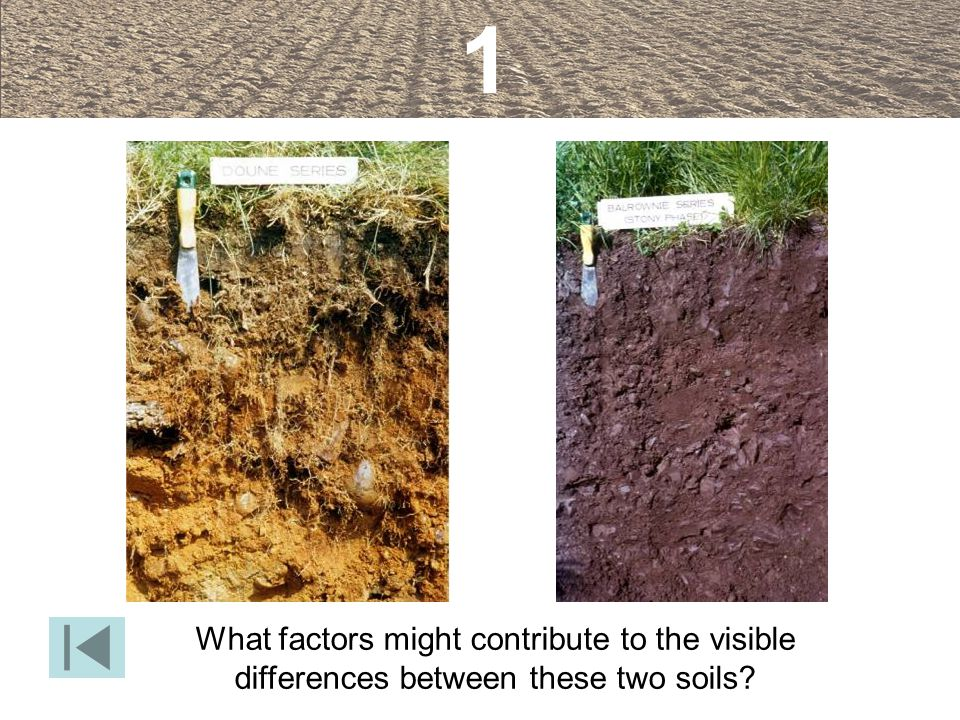 1 What factors might contribute to the visible differences between these two soils