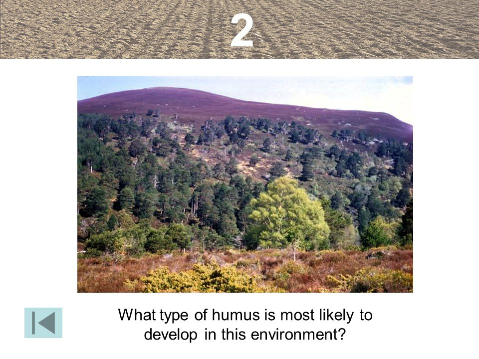 What type of humus is most likely to develop in this environment