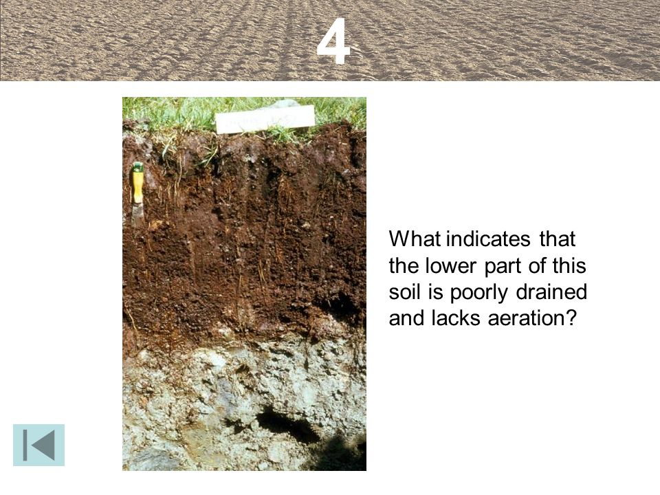 4 What indicates that the lower part of this soil is poorly drained and lacks aeration