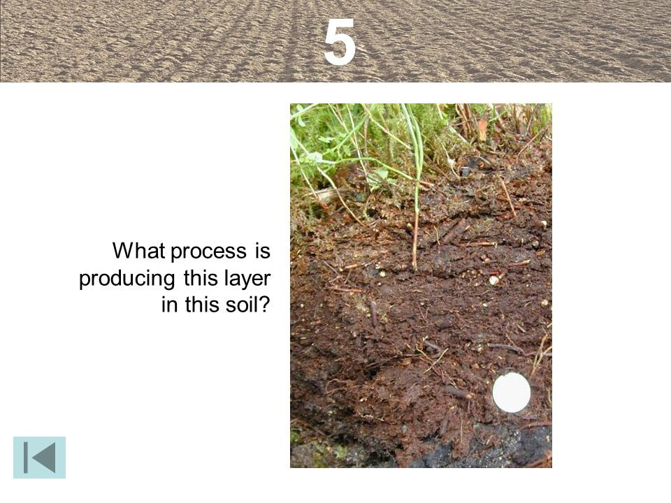 5 What process is producing this layer in this soil