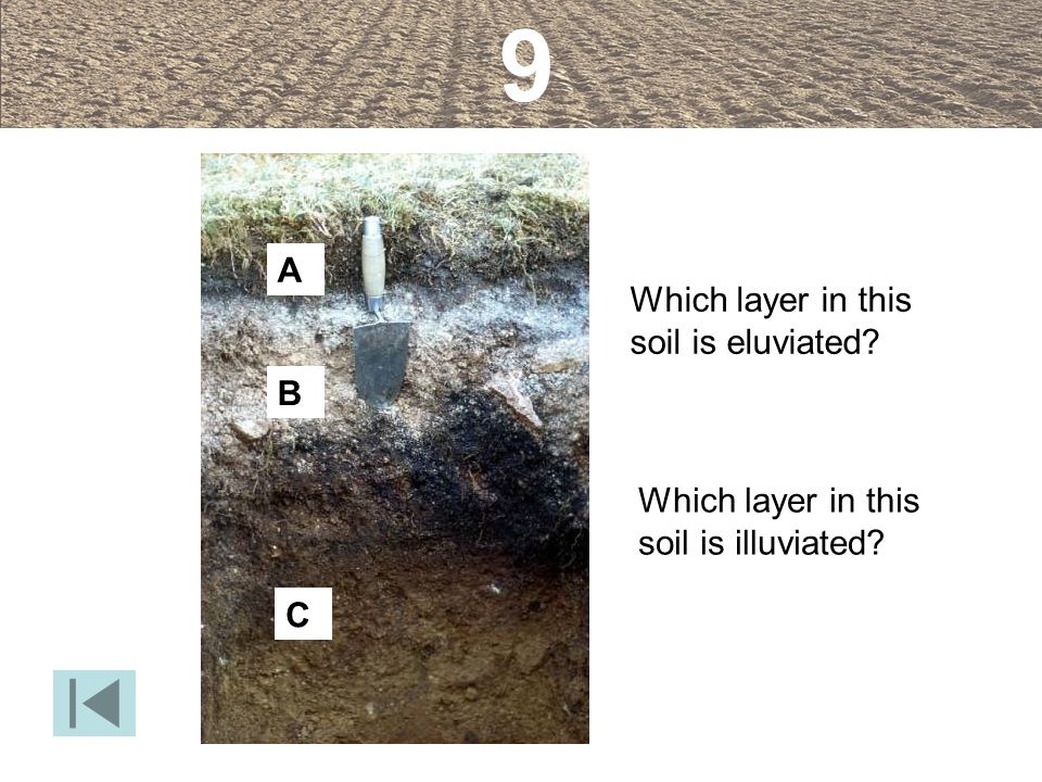 9 A Which layer in this soil is eluviated B