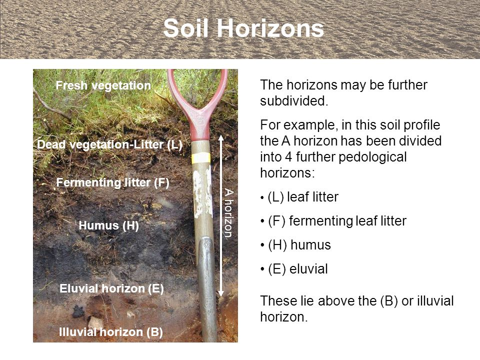An introduction to soils and soil terminology ppt video for Introduction of soil