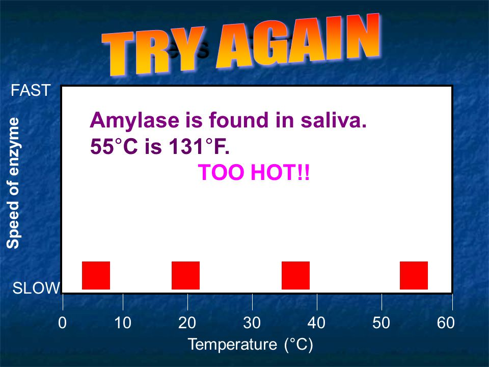 Let's GRAPH!! TRY AGAIN Amylase is found in saliva. 55°C is 131°F.