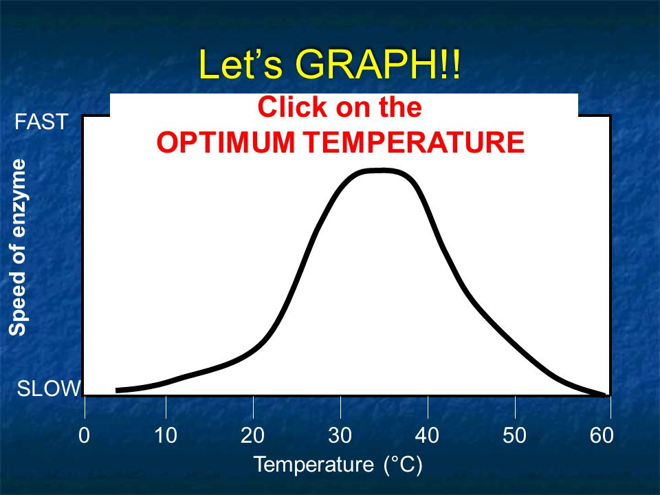 Let's GRAPH!! Click on the OPTIMUM TEMPERATURE FAST Speed of enzyme