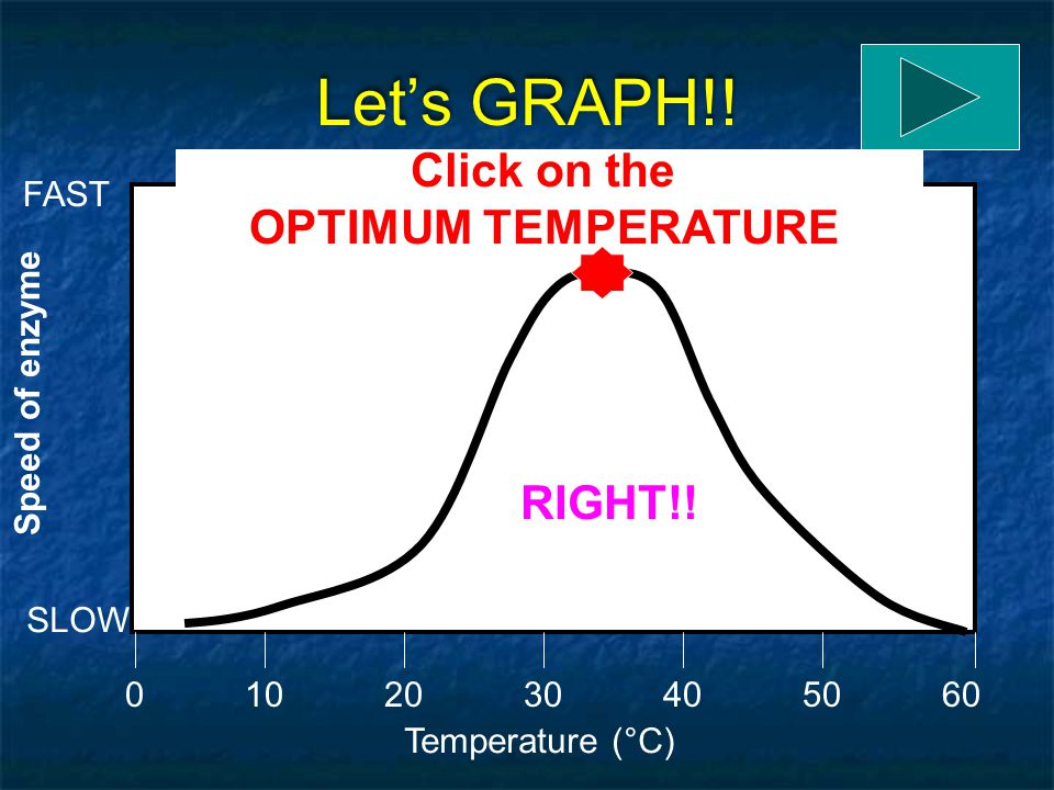 Let's GRAPH!! Click on the OPTIMUM TEMPERATURE RIGHT!! FAST