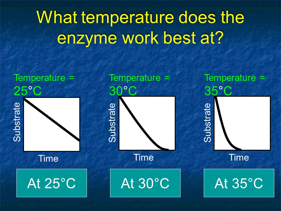 What temperature does the enzyme work best at