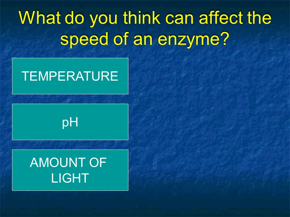What do you think can affect the speed of an enzyme