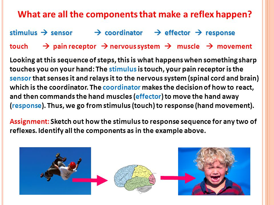 What are all the components that make a reflex happen