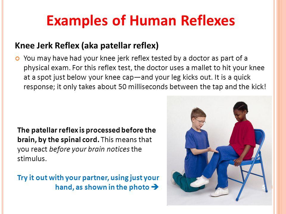 Examples of Human Reflexes