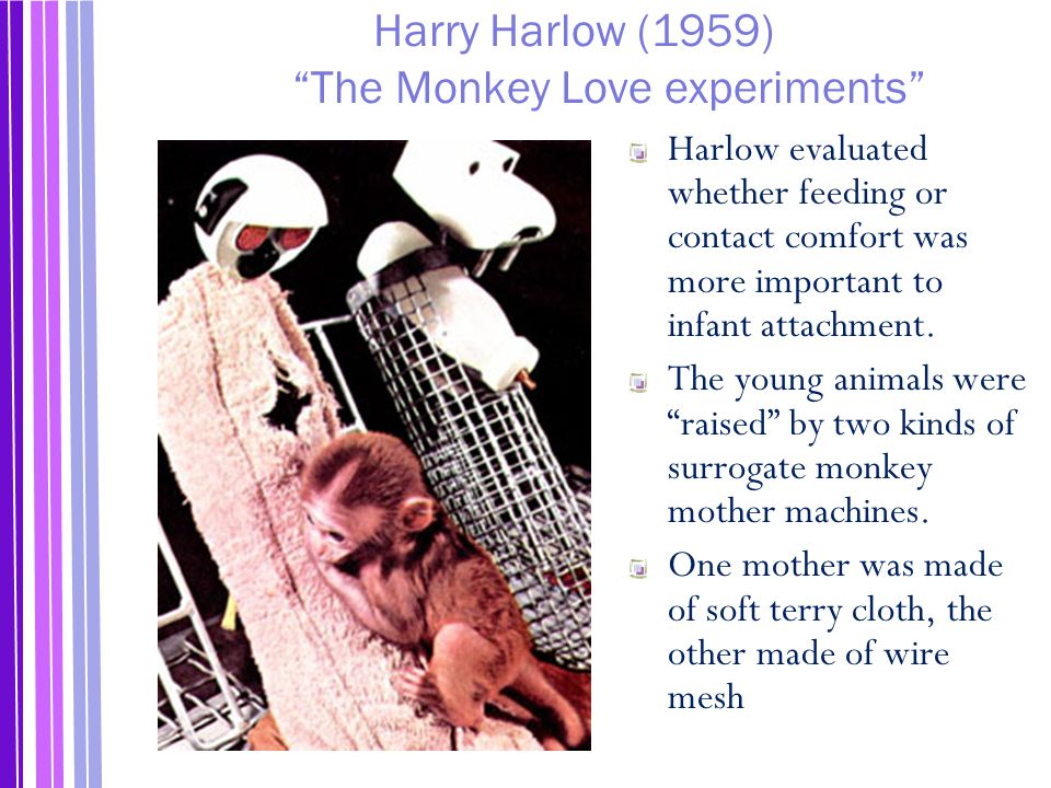 Harry Harlow (1959) The Monkey Love experiments