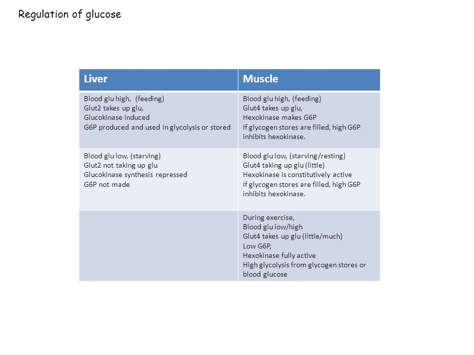 Liver Muscle Regulation of glucose Blood glu high, (feeding)