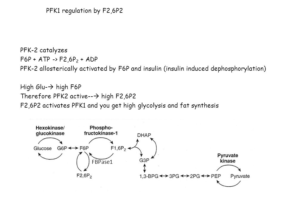 PFK1 regulation by F2,6P2 PFK-2 catalyzes. F6P + ATP -> F2,6P2 + ADP.