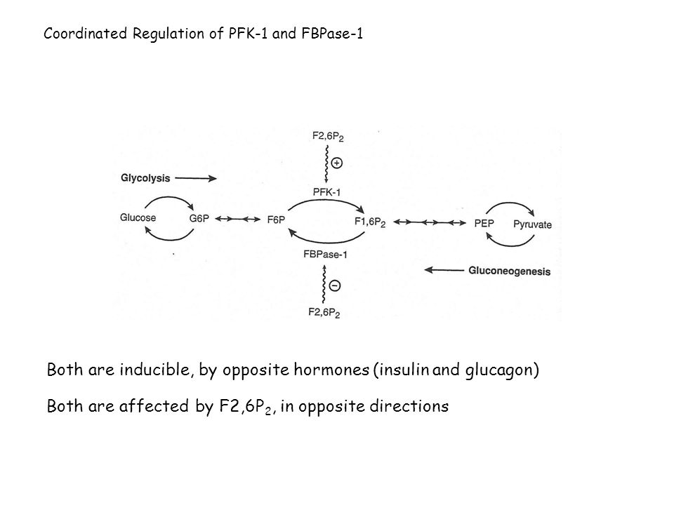 Coordinated Regulation of PFK-1 and FBPase-1