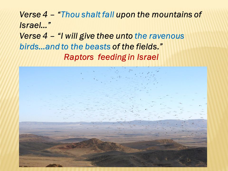 Verse 4 – Thou shalt fall upon the mountains of Israel…