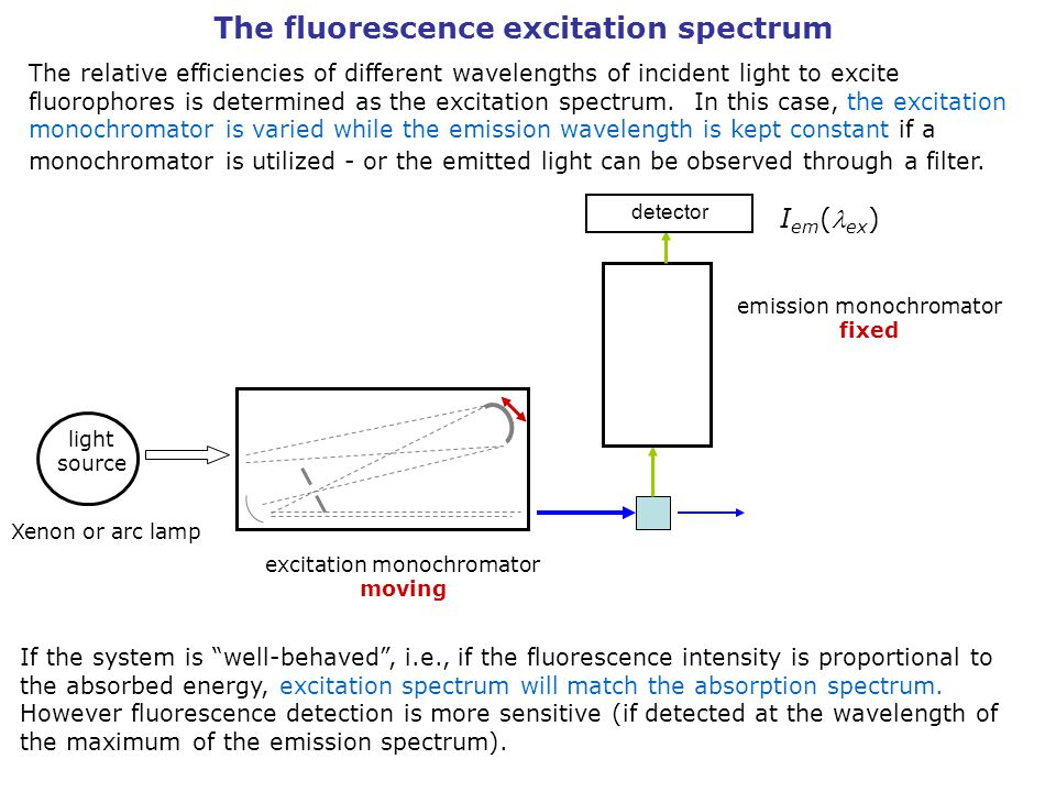 The fluorescence excitation spectrum