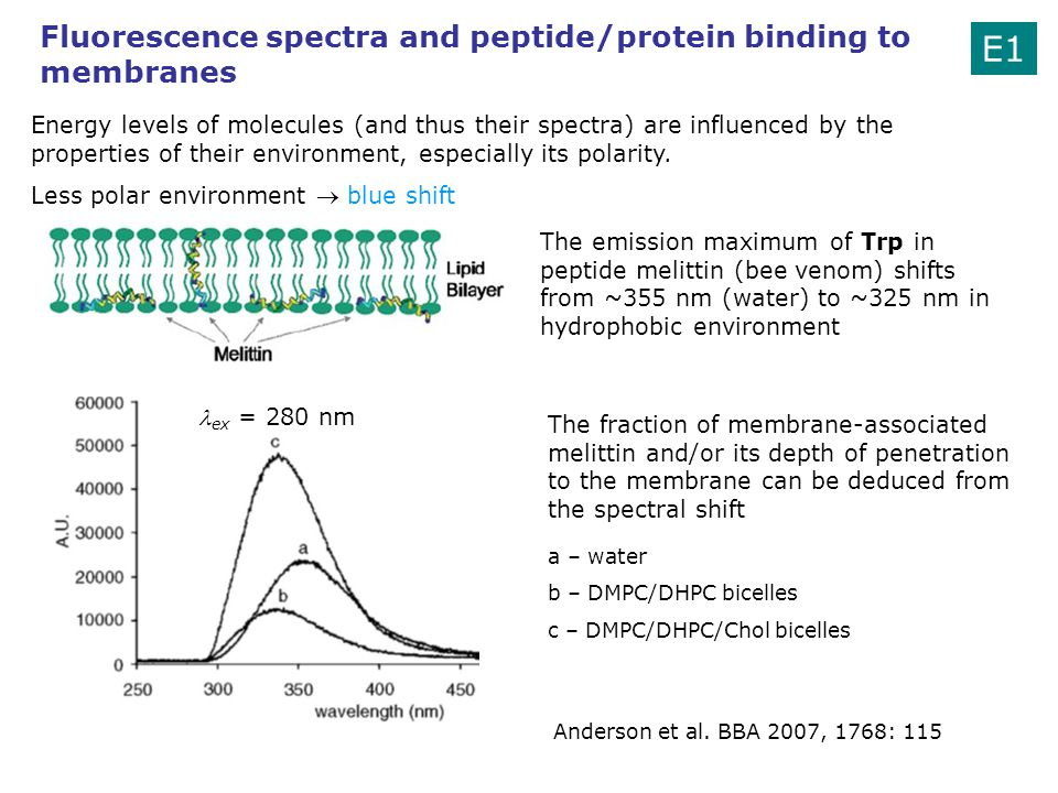E1 Fluorescence spectra and peptide/protein binding to membranes