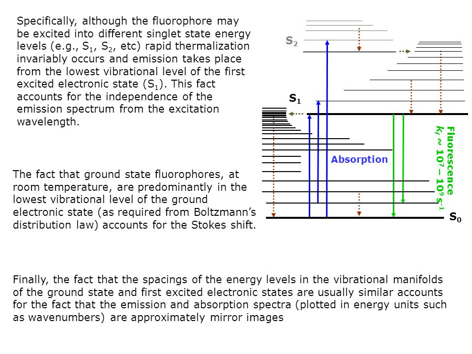 Specifically, although the fluorophore may be excited into different singlet state energy levels (e.g., S1, S2, etc) rapid thermalization invariably occurs and emission takes place from the lowest vibrational level of the first excited electronic state (S1). This fact accounts for the independence of the emission spectrum from the excitation wavelength.