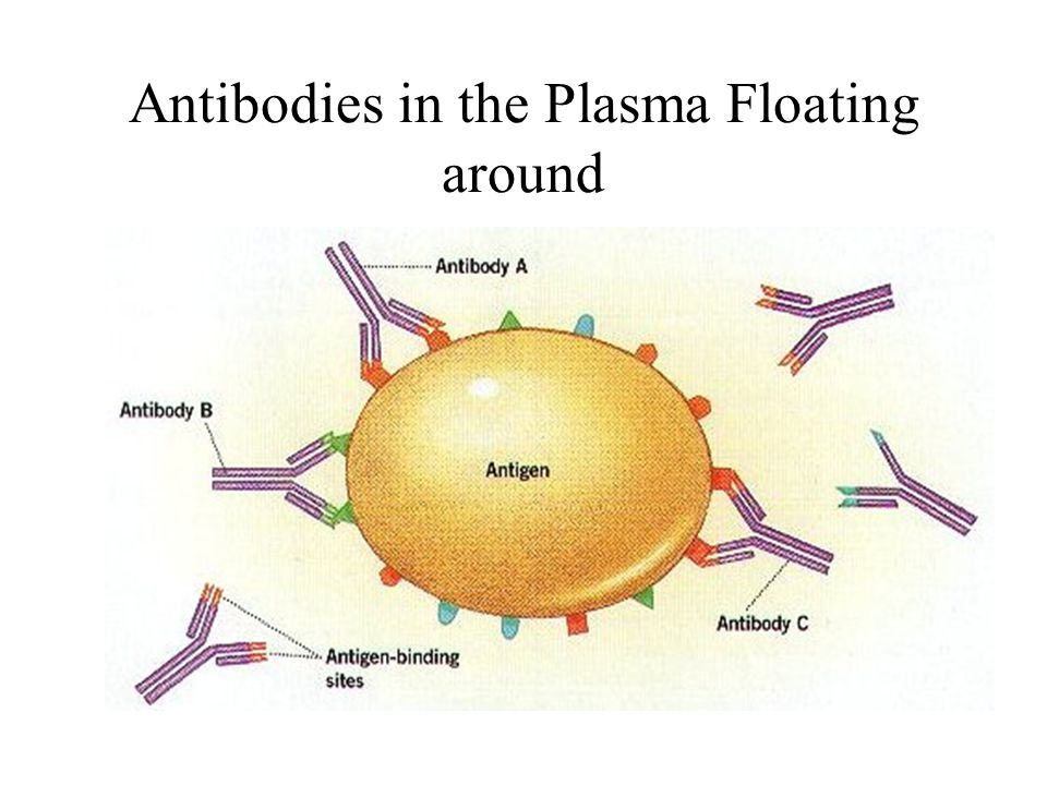 Antibodies in the Plasma Floating around