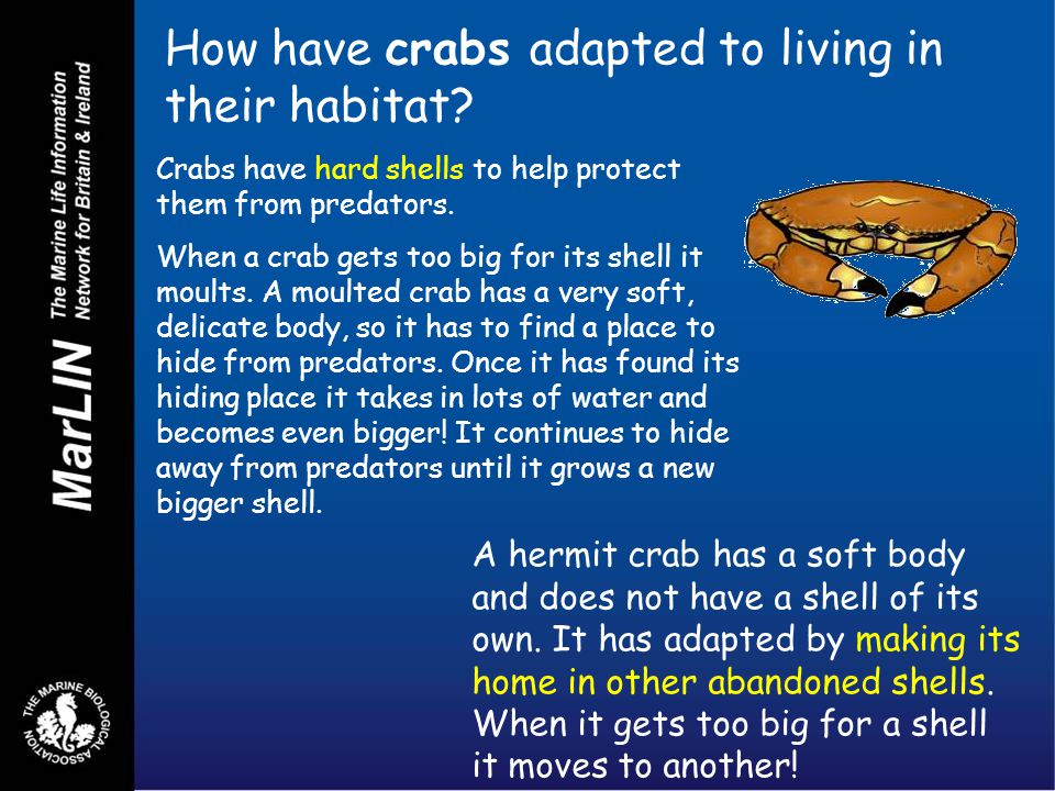 How have crabs adapted to living in their habitat