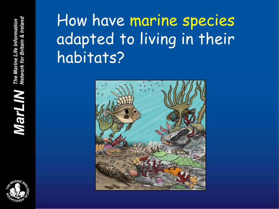 How have marine species adapted to living in their habitats
