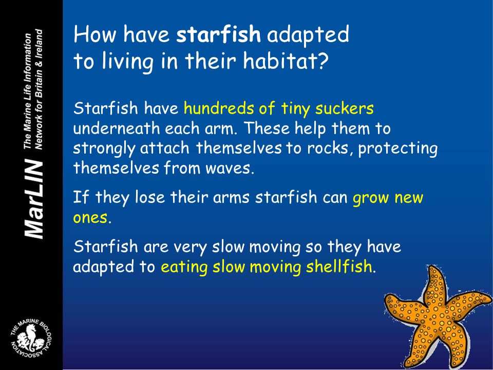 How have starfish adapted to living in their habitat