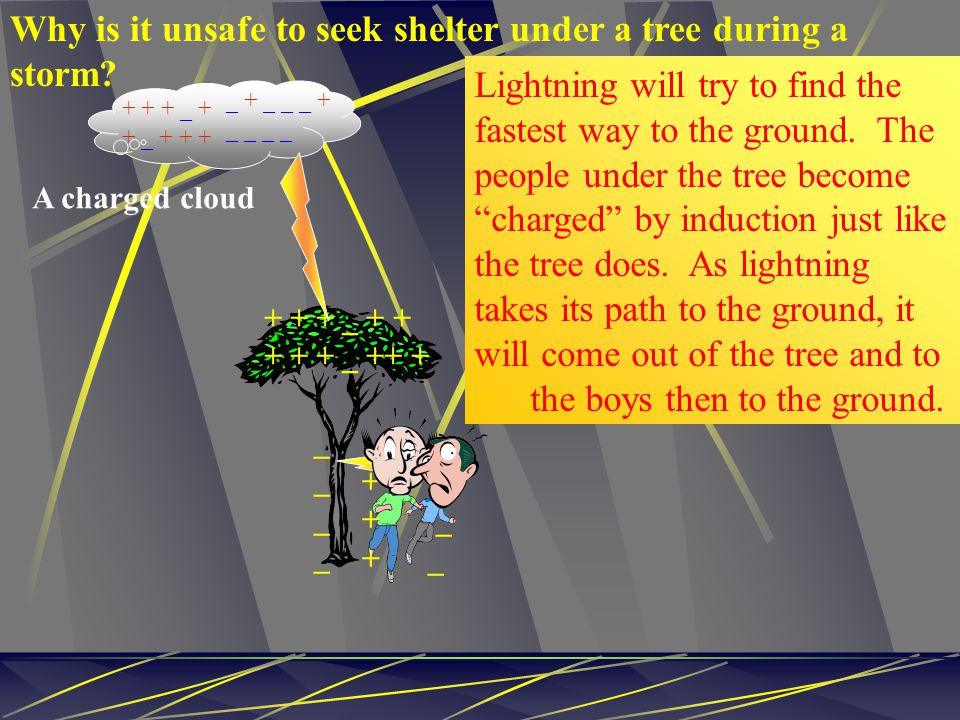 Why is it unsafe to seek shelter under a tree during a storm