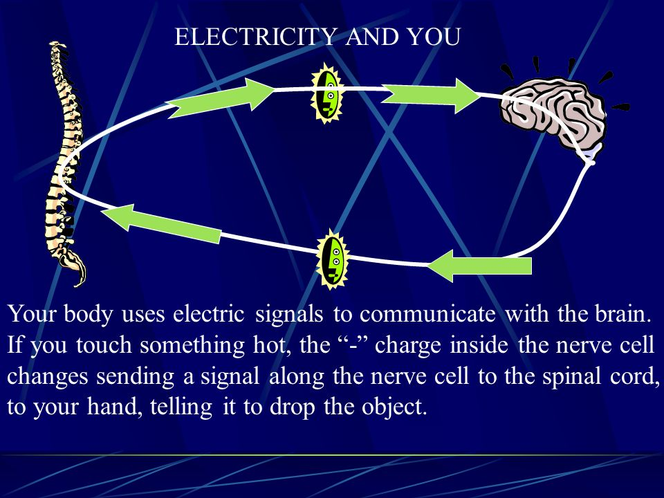 ELECTRICITY AND YOU Your body uses electric signals to communicate with the brain. If you touch something hot, the - charge inside the nerve cell.