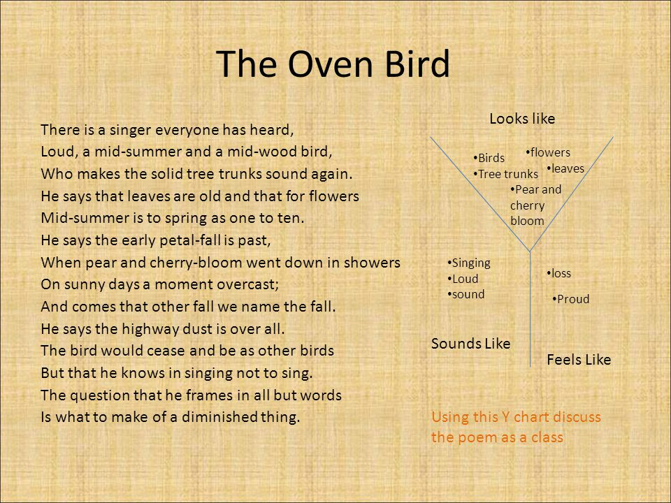 The Oven Bird Looks like There is a singer everyone has heard,