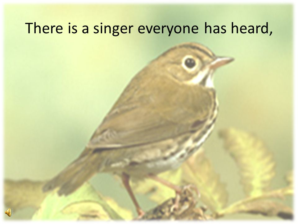 There is a singer everyone has heard,