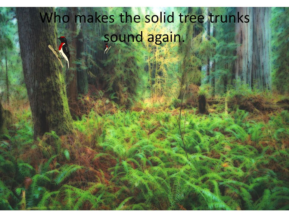 Who makes the solid tree trunks sound again.