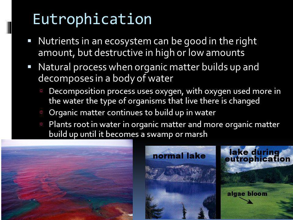 Eutrophication Nutrients in an ecosystem can be good in the right amount, but destructive in high or low amounts.