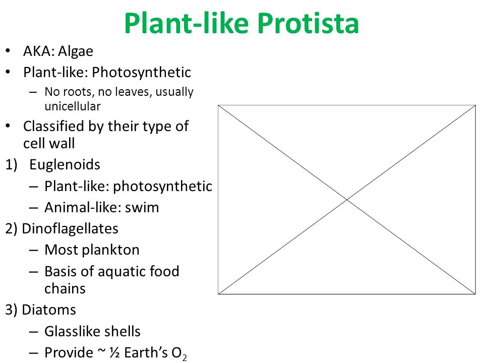 Plant-like Protista AKA: Algae Plant-like: Photosynthetic