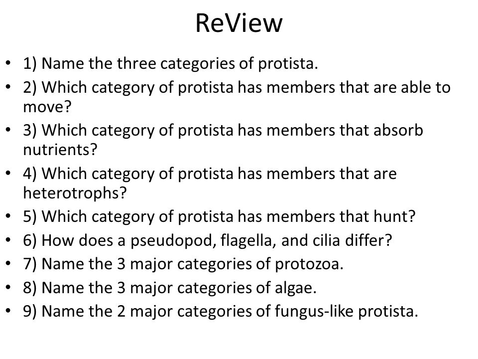 ReView 1) Name the three categories of protista.