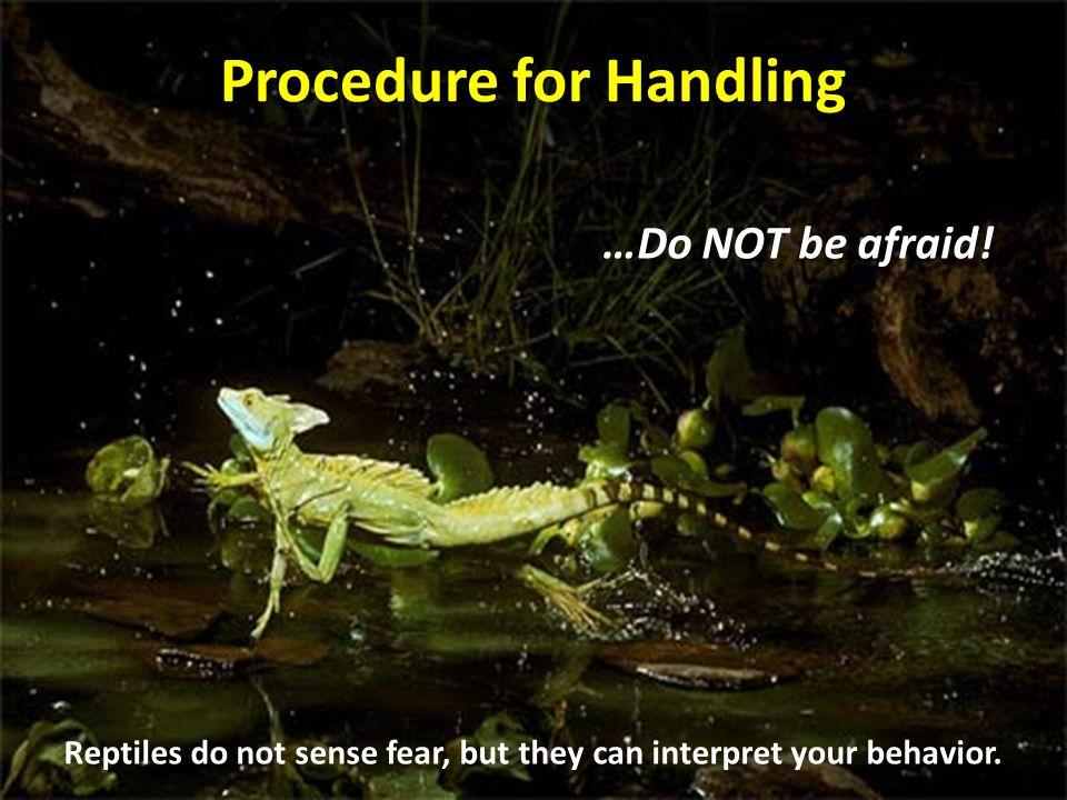 Procedure for Handling