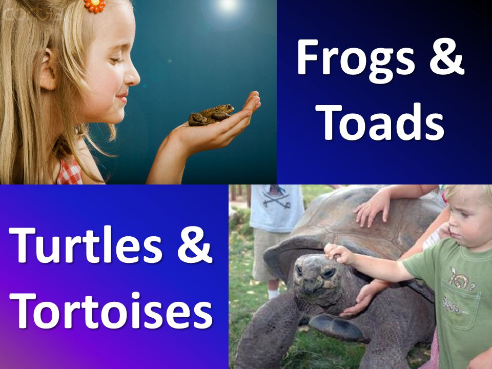 Frogs & Toads Turtles & Tortoises