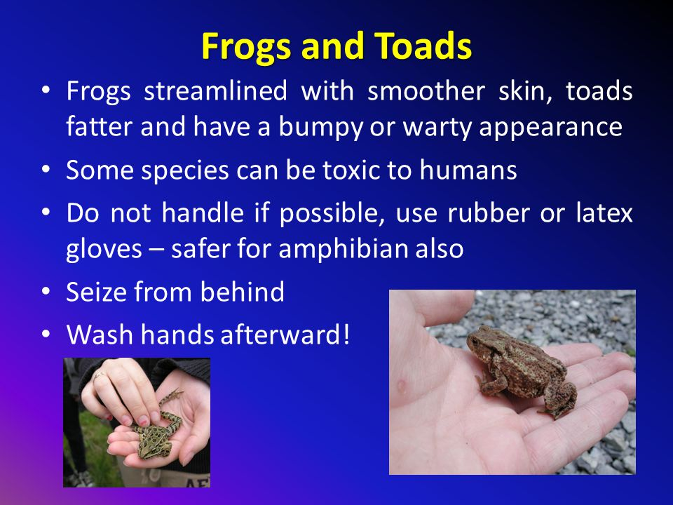 Frogs and Toads Frogs streamlined with smoother skin, toads fatter and have a bumpy or warty appearance.