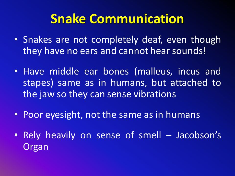 Snake Communication Snakes are not completely deaf, even though they have no ears and cannot hear sounds!