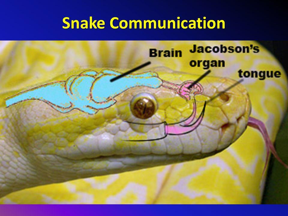 Snake Communication