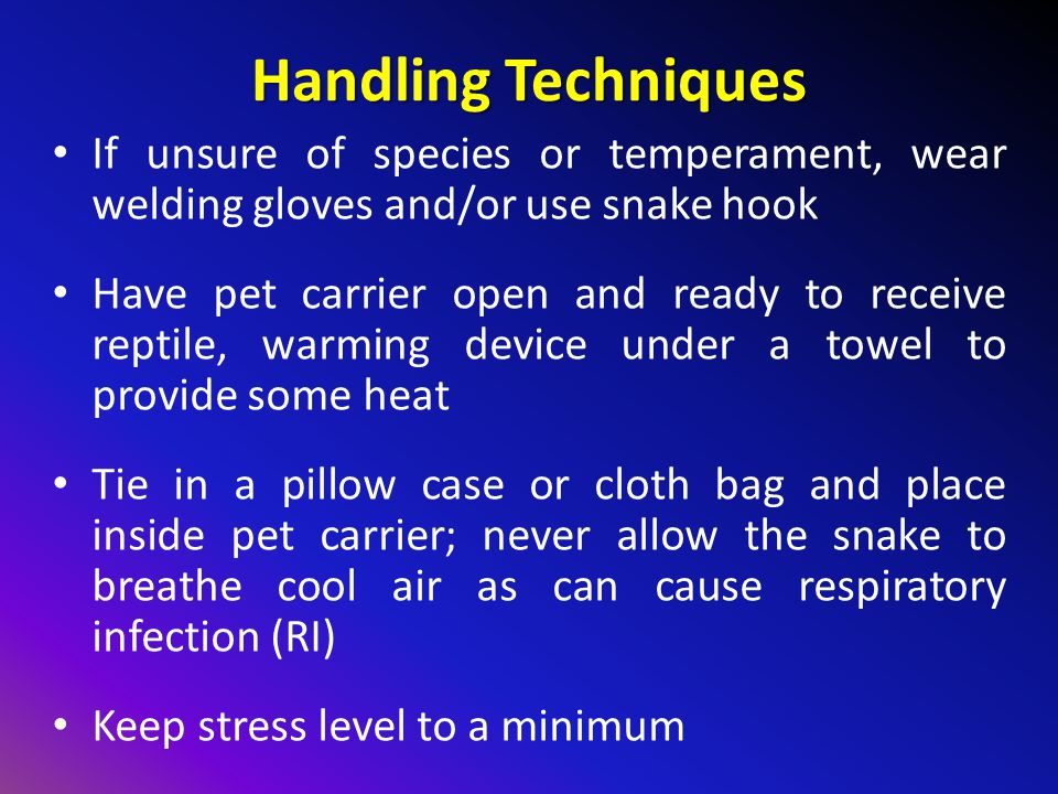 Handling Techniques If unsure of species or temperament, wear welding gloves and/or use snake hook.