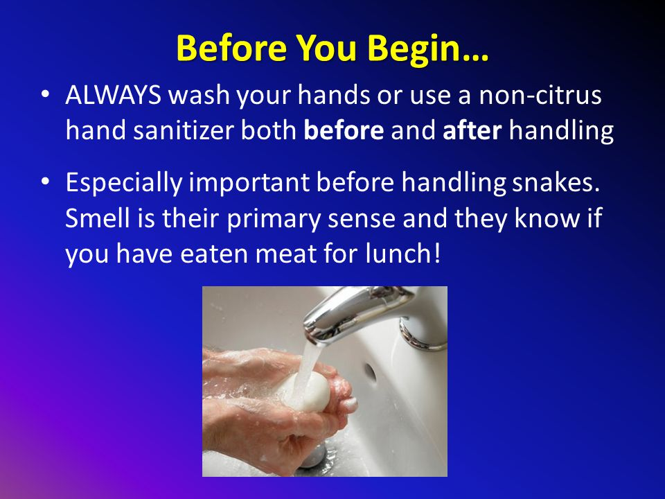 Before You Begin… ALWAYS wash your hands or use a non-citrus hand sanitizer both before and after handling.